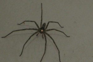Attack of the Giant Spider!
